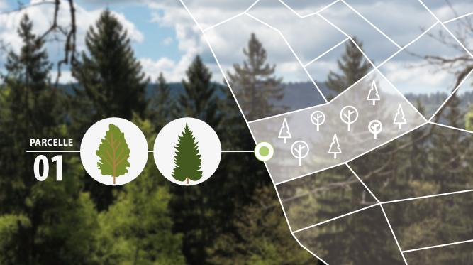 Gérer sa forêt